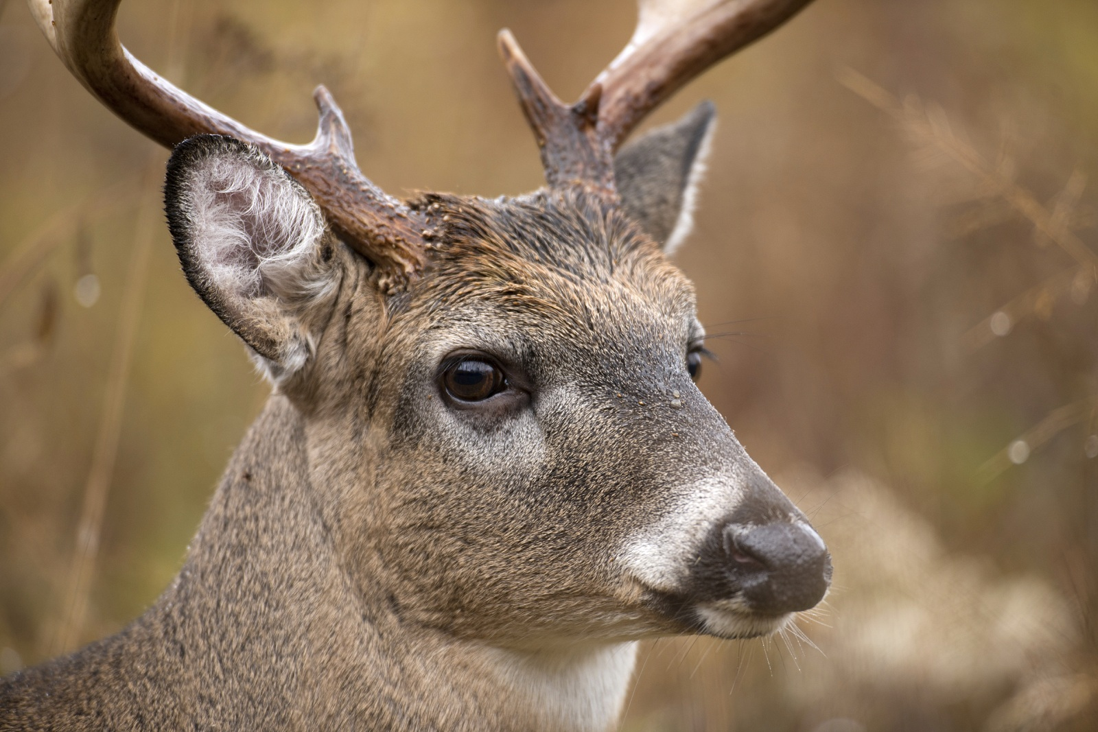 Whitetail Vision: Shedding Light on Deer Eyesight | OutdoorHub