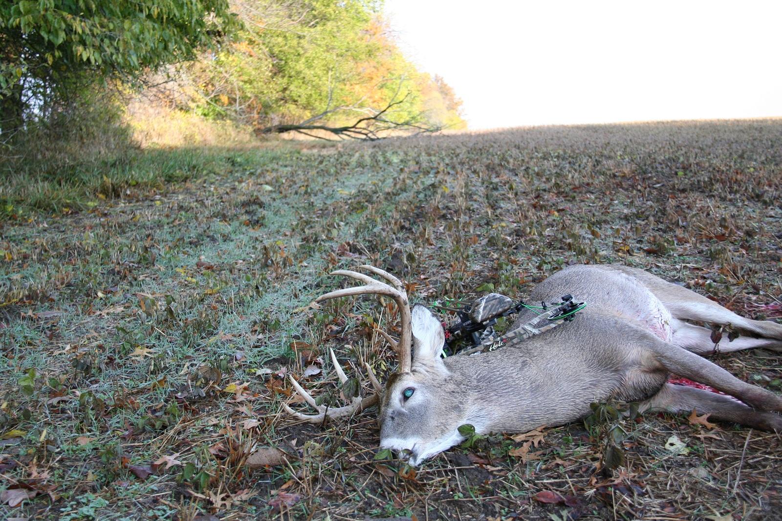 Whitetail Vision: Shedding Light on Deer Eyesight | OutdoorHub