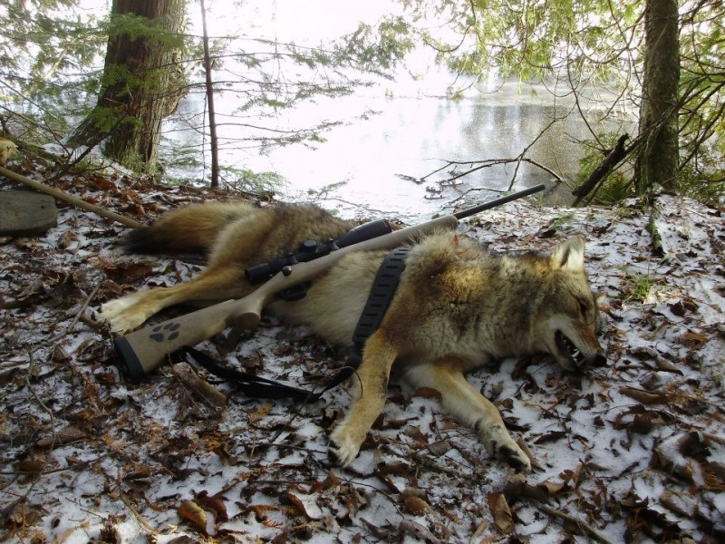 Success in coyote calling—and hunting—is a very rewarding feeling. You beat the predator at their own game.