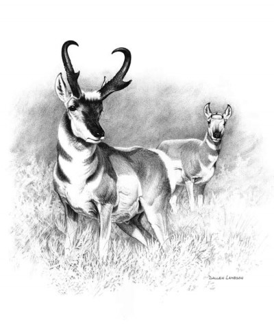 Dunn took to the Smith Ranch in eastern Wyoming to hunt pronghorn. Illustration by Dallen Lambson.