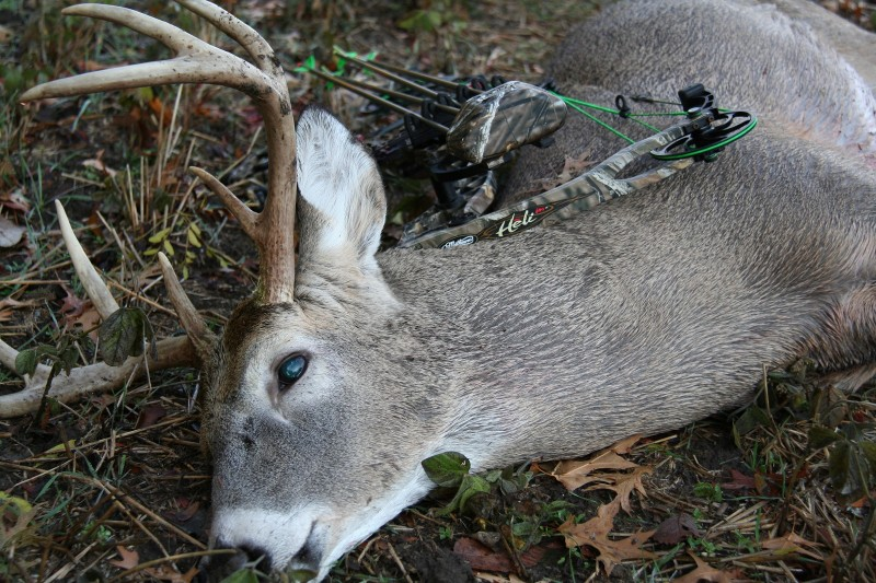 The author shot this nice buck in Iowa on November 1, 2013.