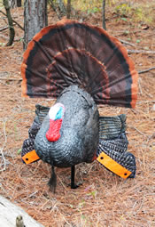 The SCOOT & SHOOT turkey decoy.