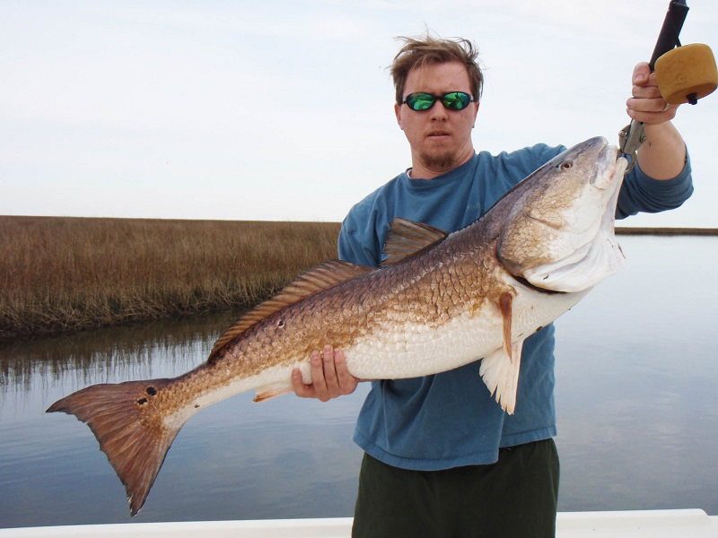 Giant redfish like this are apparently preying on nutria in the marshes along Louisiana and Mississippi's Gulf Coast.