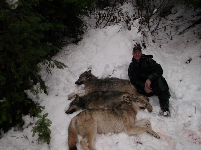 In the West, hunters are offered multiple tags and opportunities in a variety of habitats. These three Idaho wolves were called in and shot using an elk call and a coyote howl.