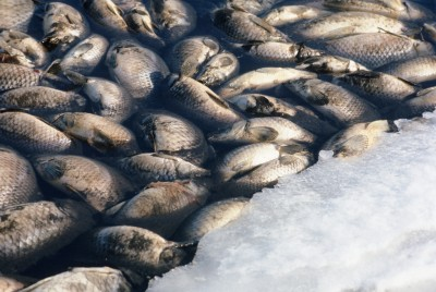 Although winterkill can be beneficial in some cases, Minnesota officials say that this year's winter could have resulted in a significant fish die-off.