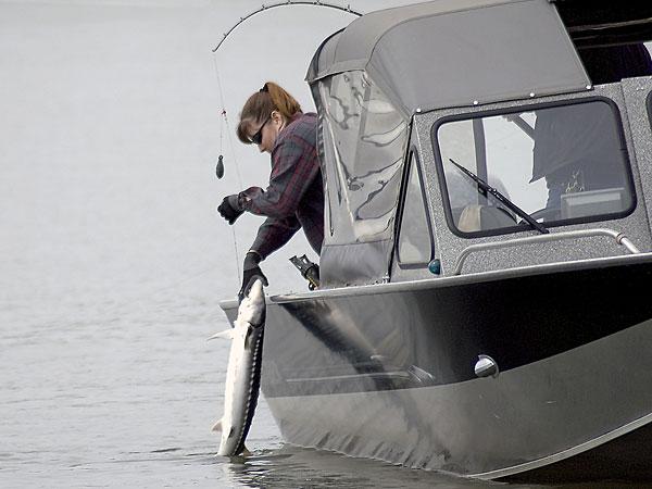 Oregon and washington set june sturgeon seasons adopt new for Sturgeon fishing washington