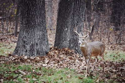 New York hunters will once again be able to use crossbows in pursuit of small and big game.