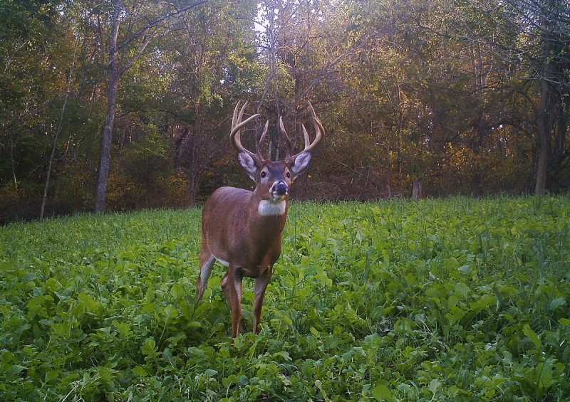 This is what we all love to see, a nice buck hitting the food plot right during peak hunting time. It's hard work to plant and maintain good food plots, but the payoff can be well worth the effort!