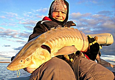 Dylan Hahn (10) from Thief River Falls, Minnesota caught a number of sturgeon on his first outing. This one was 50 inches, and his very first one of the day was a tagged 41-inch fish.