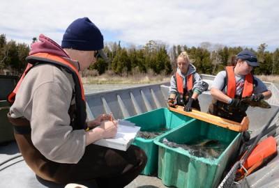 Scott Hansen, the DNR's Lake Michigan biologist in Sturgeon Bay, records data as DNR biologists Bobbi Kolstad and Emily Kurszewski measure, inspect and mark smallmouth bass.