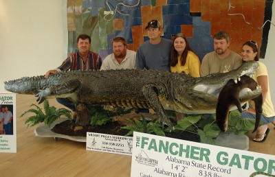 The largest gator taken in Alabama since the season started in 2006 was the alligator taken by Keith Fancher and crew on the Alabama River in the West Central zone. The gator measured 14 feet, two inches and weighed 838 pounds. The successful hunting team included: (from left) Keith Fancher, Mike Bailey, J.C. Peeples, Stacey Peeples, David Hatchett, and Mindy Hatchett.