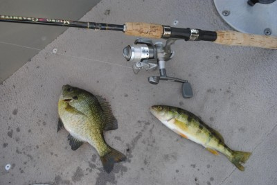 Bluegills and perch willingly take leeches on Houghton Lake.