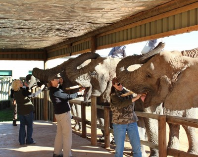 Michelle, Britney, Cindy, and Andrea feeding their elephants.