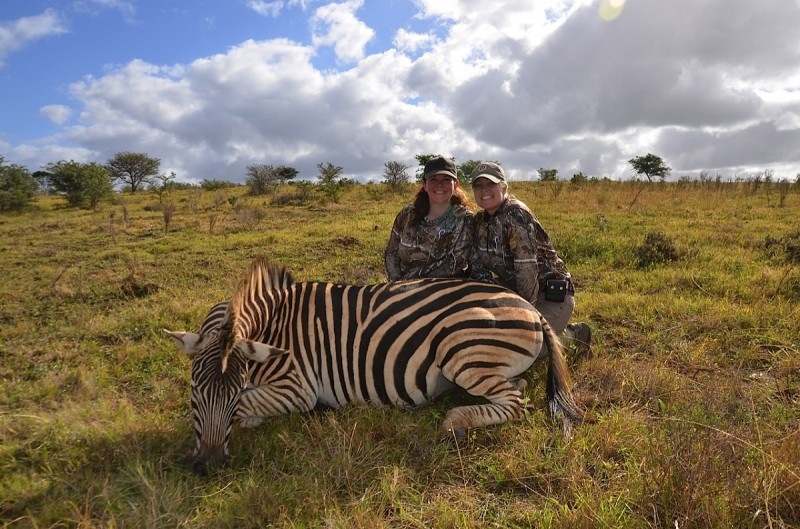 Michelle's Zebra. Image courtesy Dwaine Starr.