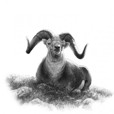 Dennis Dunn's third attempt to harvest a trophy stone ram would prove successful, but his triumphant harvest would not come without its fair share of heartache. Illustration by Dallen Lambson.