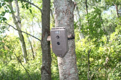 Game cameras are an important part of scouting. Hunting the weekends allows you to obtain more information by using cameras before you arrive to hunt.