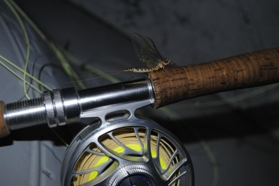 When the big bugs (like this hex) come out, so do the big browns.