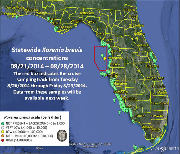 The FWC's most recent report on the bloom off Florida's west coast.