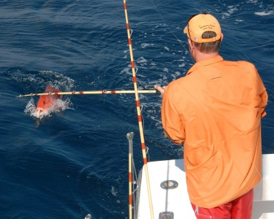 You can find plenty of big fish when you go offshore on a party boat fishing trip.