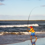 In late summer and early fall, anglers should look to the surf for some great fishing action.