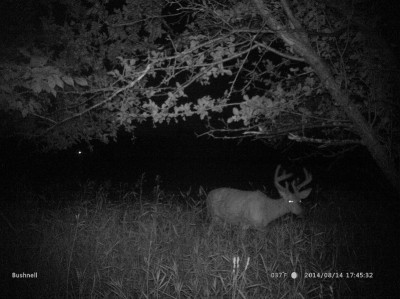 The antler point restrictions in some parts of Michigan are working. Odds are this buck wouldn't have ever made it this far, but now that hunters are forced to be more selective, he has a chance to reach good, mature size.