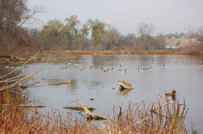 Ponds and lakes full of huntable birds await sportsmen who come to Michigan seeking waterfowl.