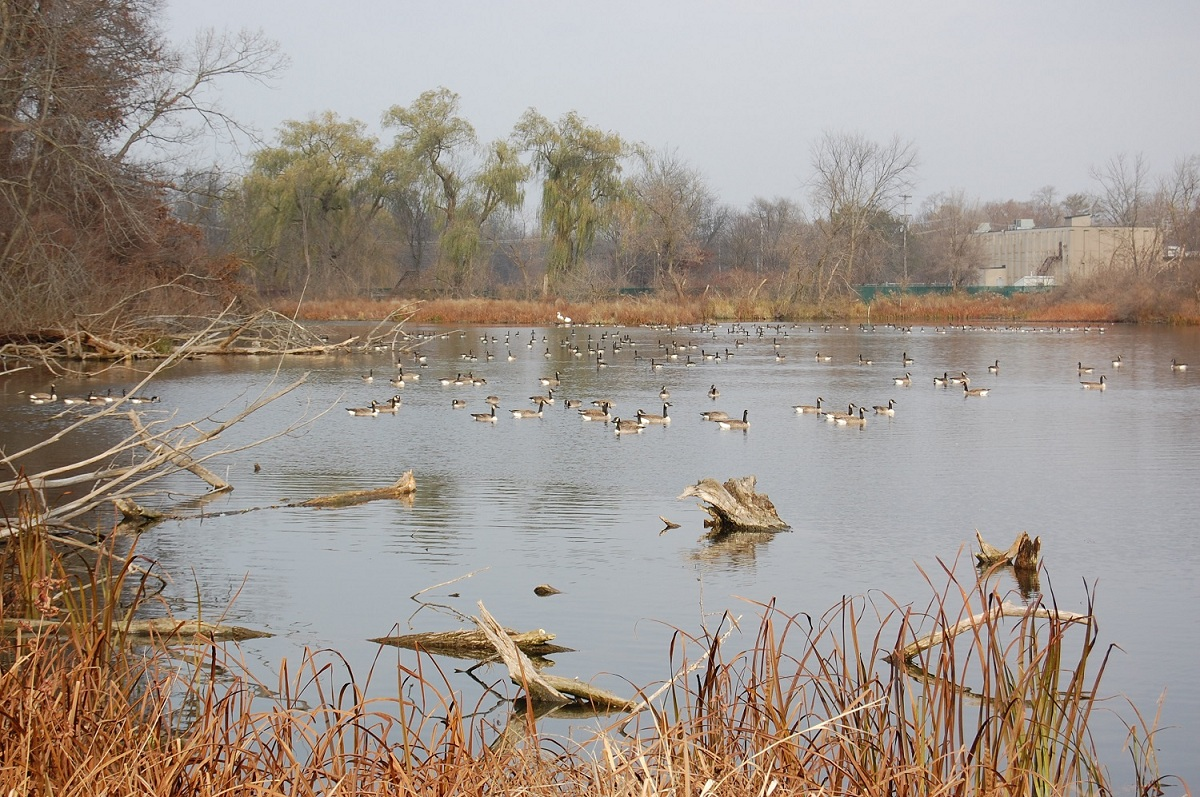 Duck Duck Goose Waterfowl Hunting Options Abound In