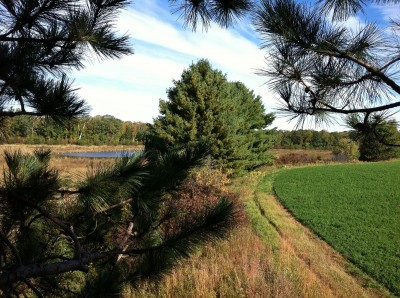 The edges of crop fields provide great ambush points for deer in early archery season.