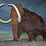 Woolly_Mammoth-RBC
