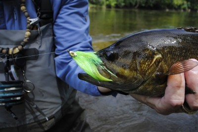 Streamers, like this sparkle minnow, are the ticket for Flint River smallies.