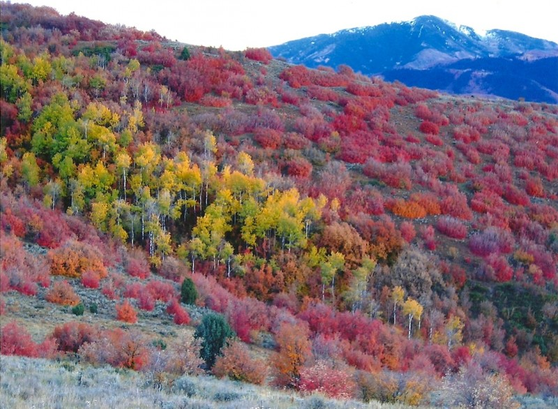 Just a small sampling of the autumnal beauty of the Wasatch Mountains. Image courtesy Dennis Dunn.