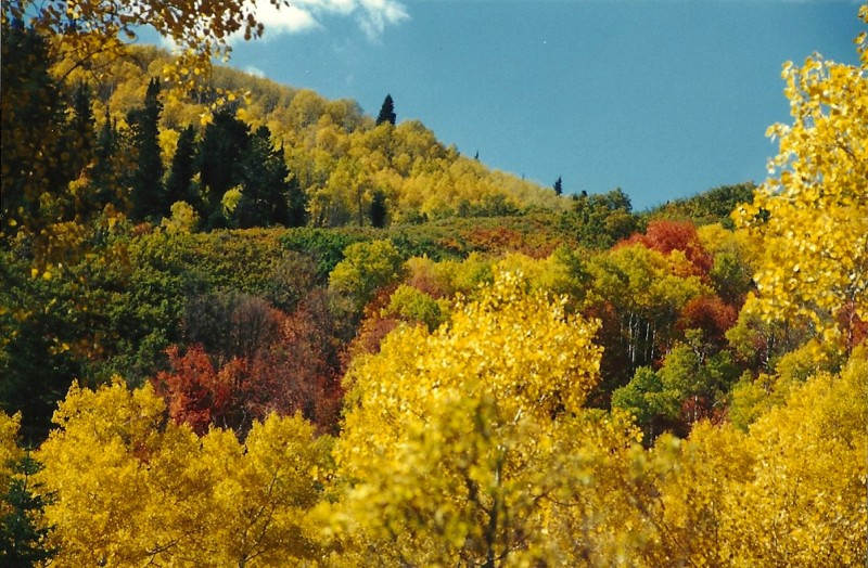 More Wasatch fall colors. Image courtesy Dennis Dunn.