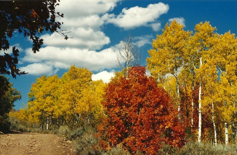 More of the Wasatch Mountains' beautiful fall scenery. Image courtesy Dennis Dunn.