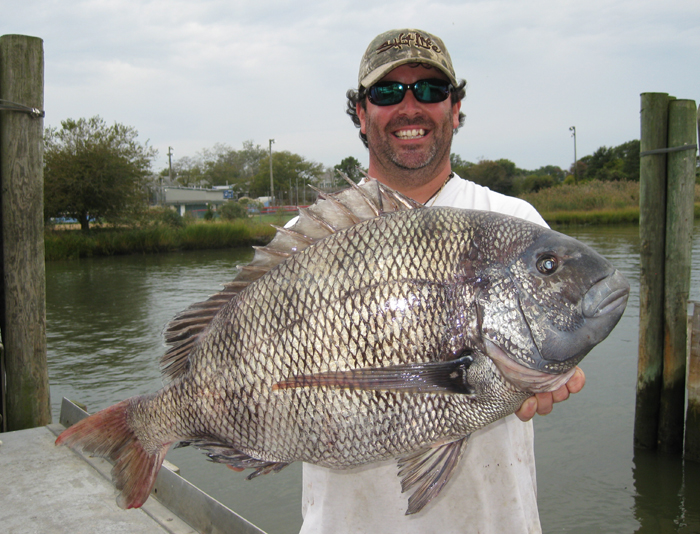 Delaware angler catches delicious record sheepshead for Fishing in delaware