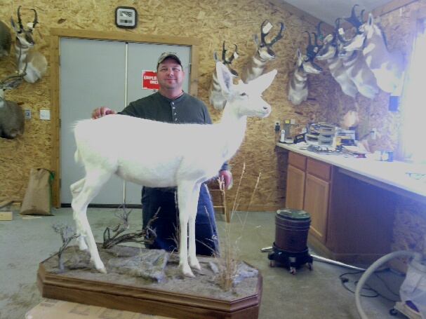Jeff Foster with his albino mule deer buck. Have you seen one like it?