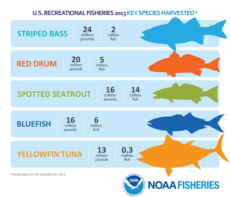 Infographic: The State of Saltwater Fishing in the United ...