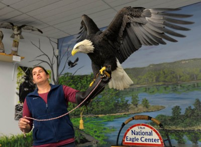 Bridget Befort, director of eagle care at the National Eagle Center in Wabasha, Minnesota, shares insights into eagles with help from one of the center's rehabilitated bald eagles.