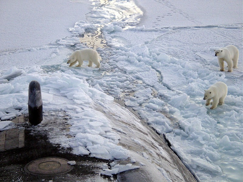 Also polar bears, you have to watch out for polar bears. Image courtesy US Navy.