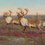 18-Woodland Caribou_PG_308-321_lr