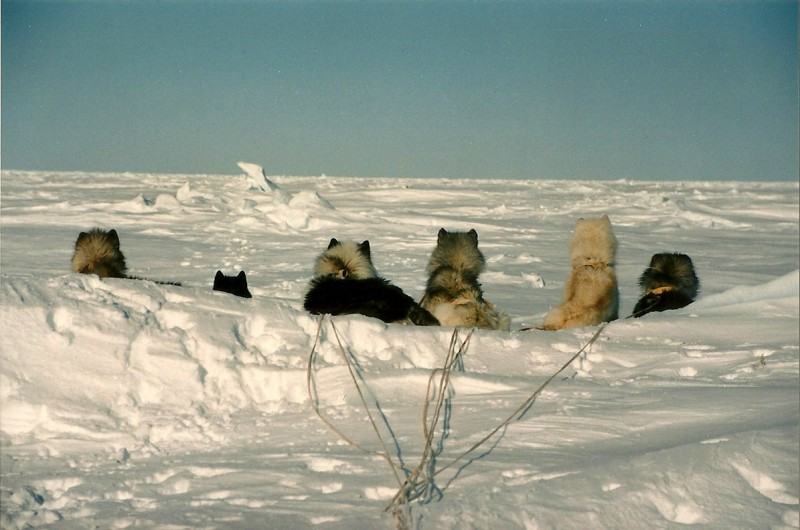 There's a bear out there somewhere! Image courtesy Dennis Dunn.