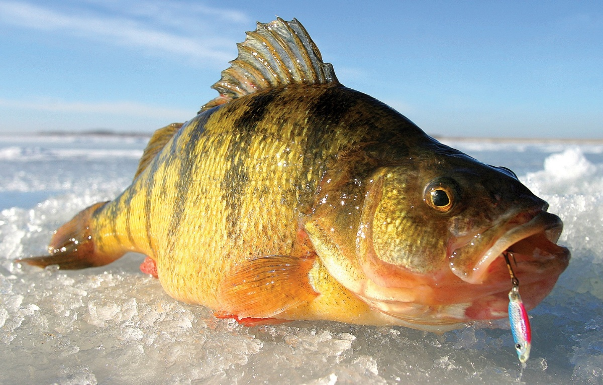 Go small or go home 10 great small lakes for ice fishing for Ice fishing perch lures