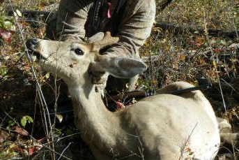 A picture of the unicorn doe harvested in near Spokane, Washington. Image courtesy Amy C.