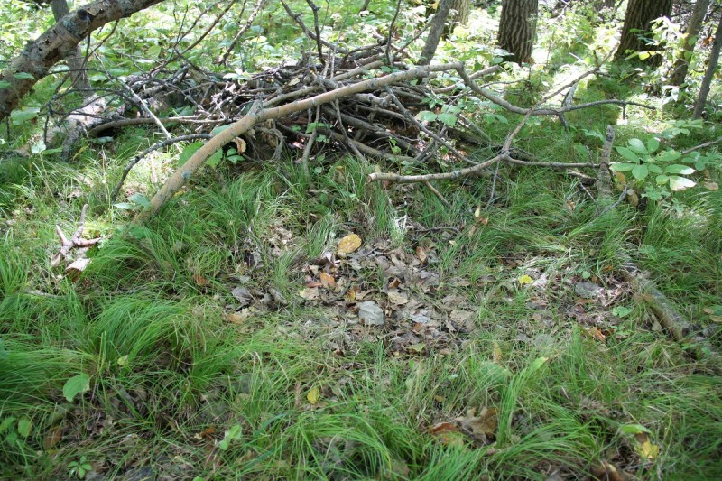 This small pile of brush placed by the author has been regularly used as a bed by the bucks on the property. Mature deer like to have some structure to lie down next to.