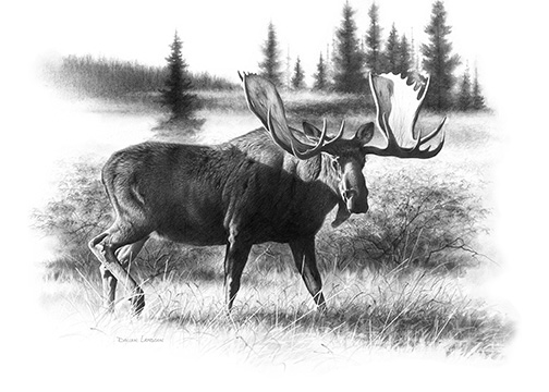 Dunn's shot at a trophy Canadian moose had arrived at last. Illustration by Dallen Lambson.