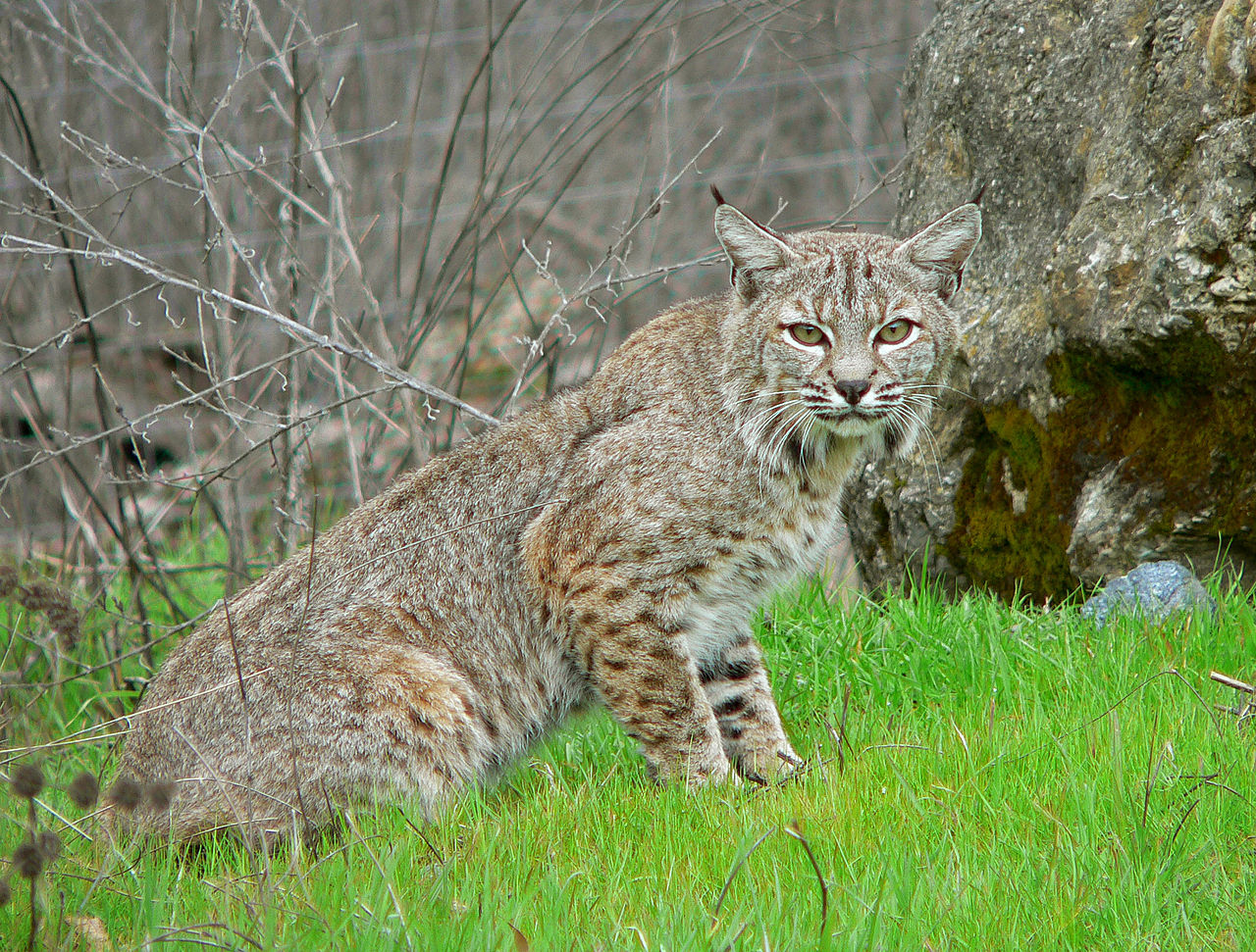 Illinois Department Of Natural Resources Wildlife