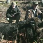 At 707 pounds, this wild boar could be one of the largest ever harvested in North Carolina.