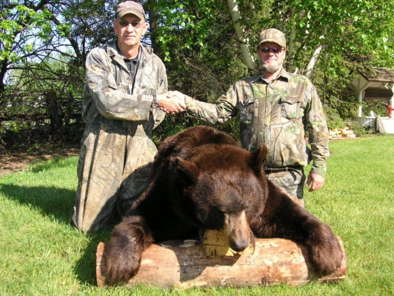A big chocolate-colored bear shot at Grandview Outfitters in Manitoba's Duck Mountains. Image courtesy Grandview Outfitters.