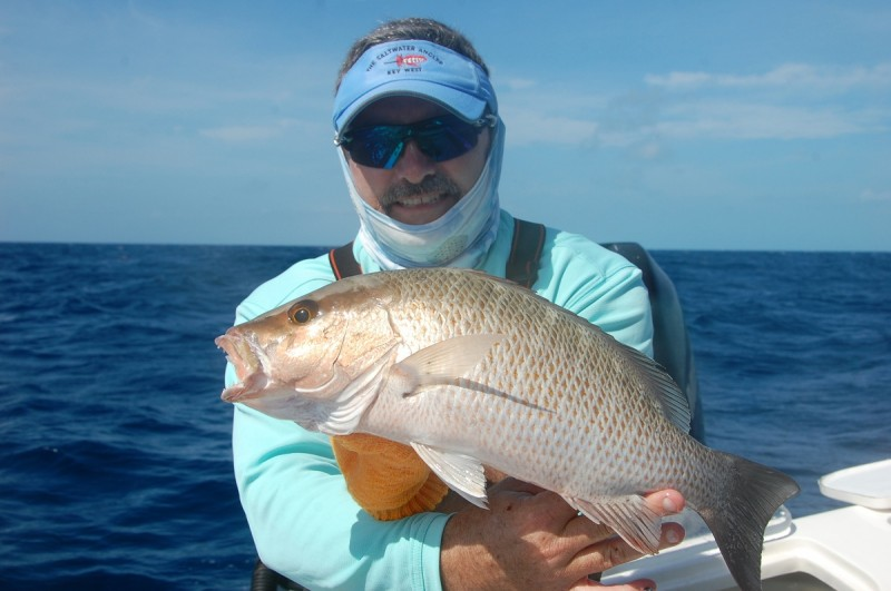 Mangrove snapper make for good eating.