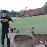 deeer