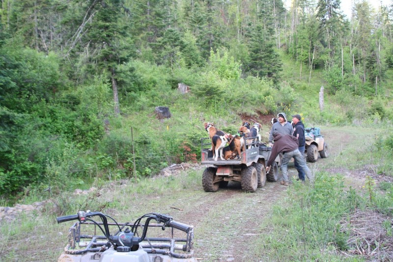 Well-trained hounds are a joy to watch and be around. Travis' dogs are thrilled to be in the mountains every day and you can see how much they love what they do.